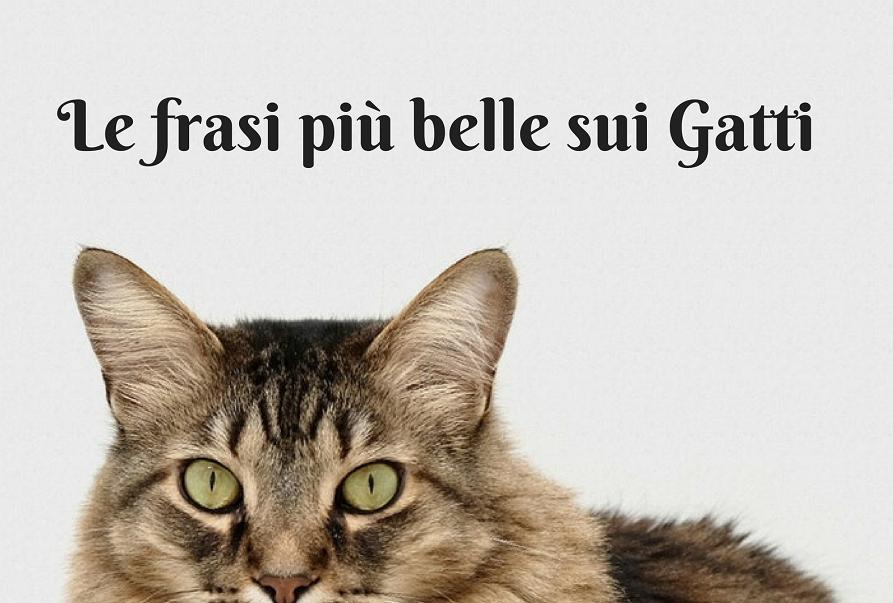 frasi sui gatti