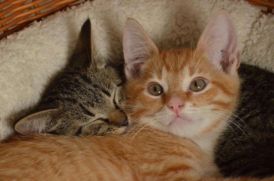 gatto-cura-veterinario