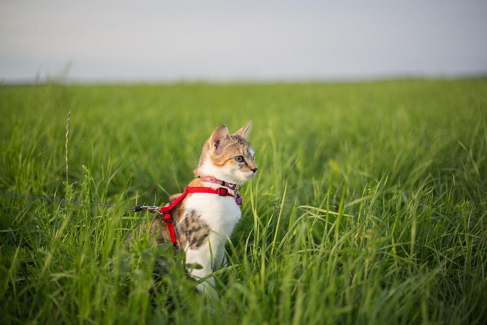 gionzaglio-gatto-foto