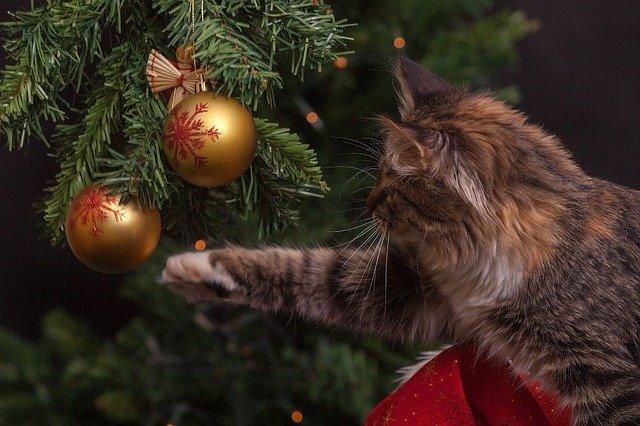 albero di natale gatto