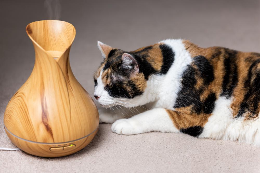 olio-essenziale-per-gatti-foto