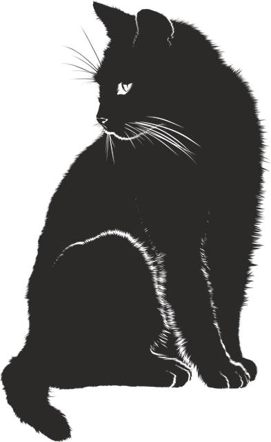 sistemi di organi gatto