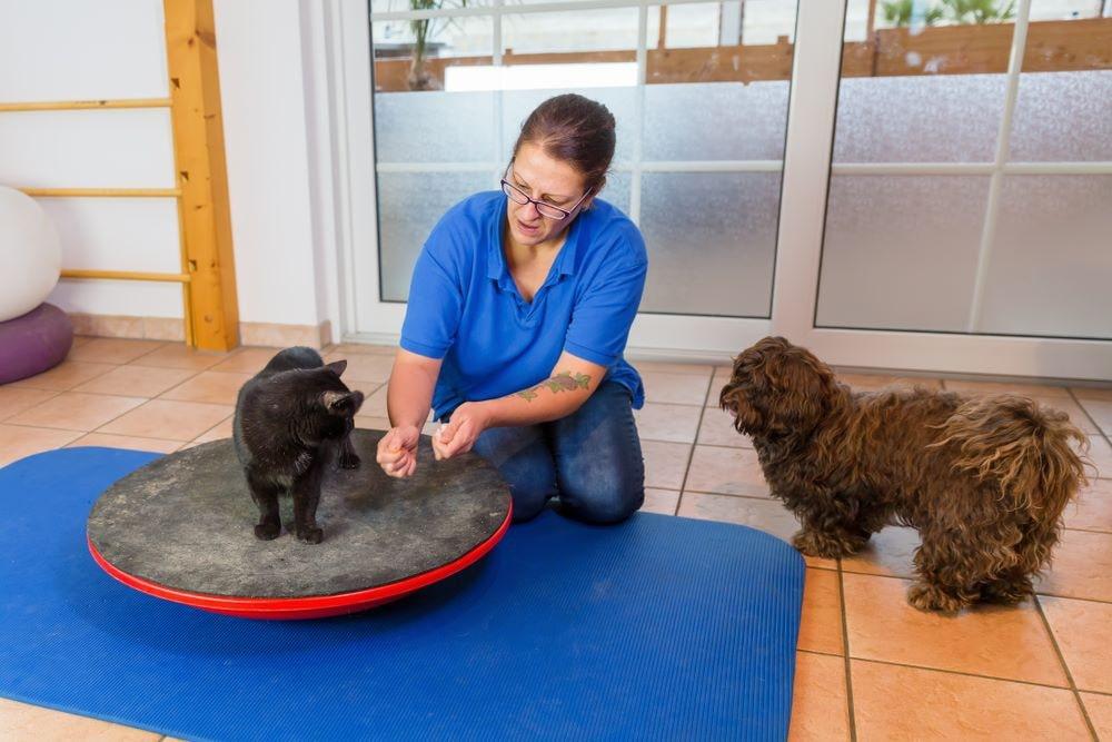 fisioterapia gatto