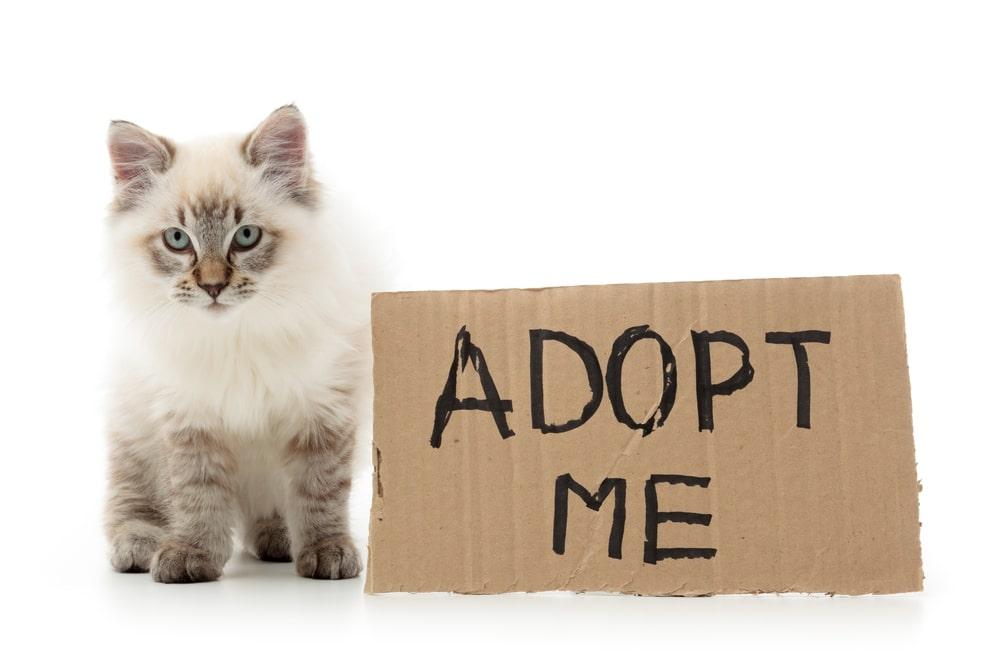 adotta-gatto-foto
