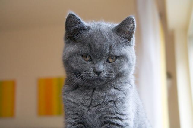 7 cose incredibili che accadono quando si possiede un gatto
