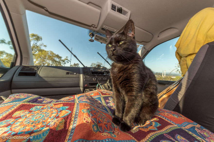 camper gatto coppia