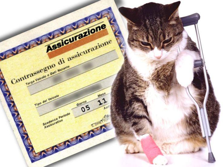 assicurazione gatti